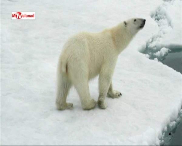 دانلود مستند خرس های قطبی از مجموعه اسرار سیاره خشمگین