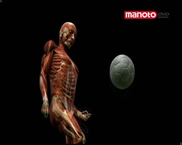 بدن انسان در تنگنا
