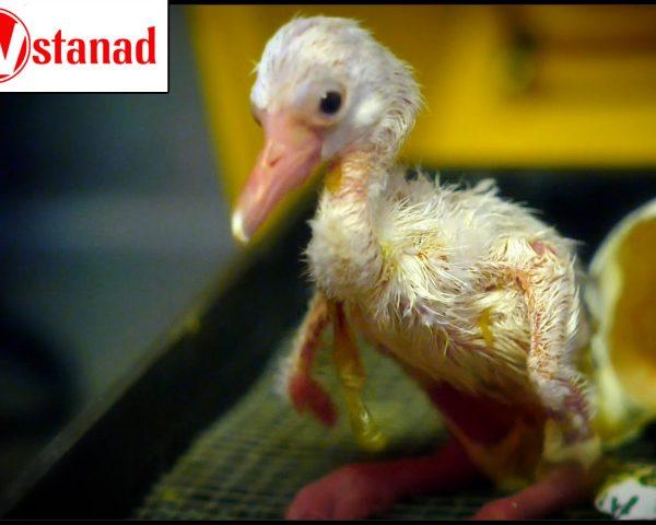 شگفتیهای تولد حیوانات