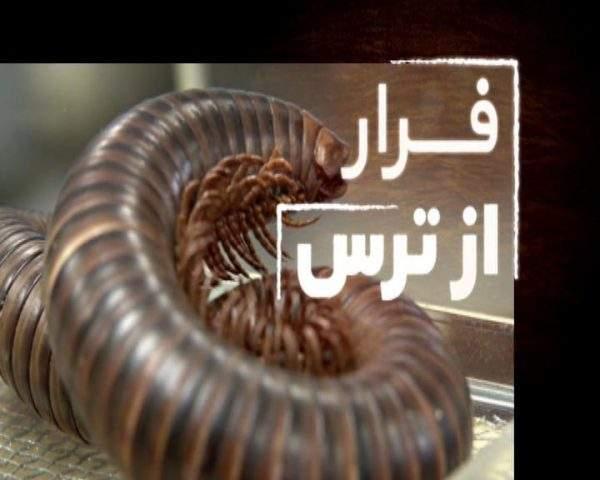 دانلود مستند فرار از ترس - 7 از مجموعه فرار از ترس