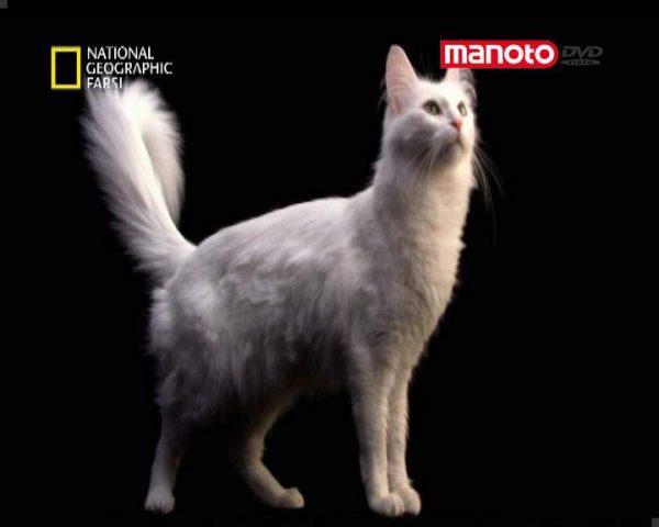 دانلود مستند درباره ی گربه ها از مجموعه برنامه علمی