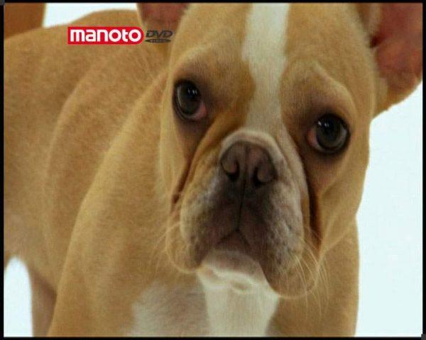 دانلود مستند دنیای سگ ها 1 - 1 از مجموعه دنیای سگ ها