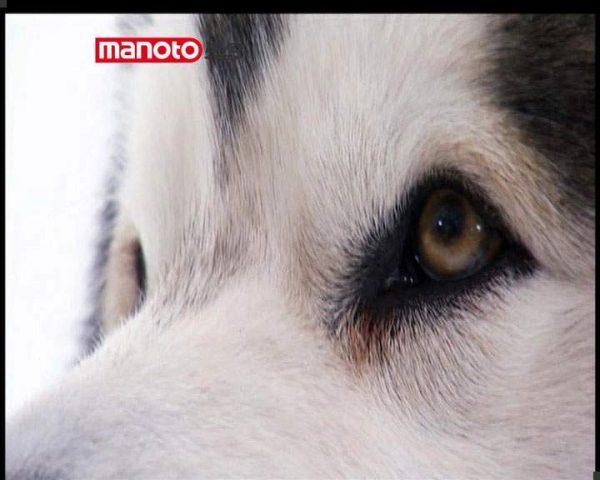 دانلود مستند دنیای سگ ها 2 - 1 از مجموعه دنیای سگ ها
