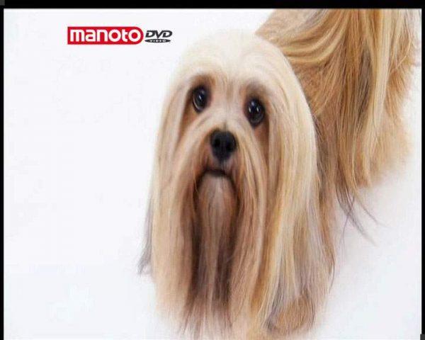 دانلود مستند دنیای سگ ها ۲ – ۲ از مجموعه دنیای سگ ها