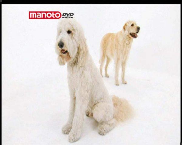 دانلود مستند دنیای سگ ها ۲ – ۳ از مجموعه دنیای سگ ها