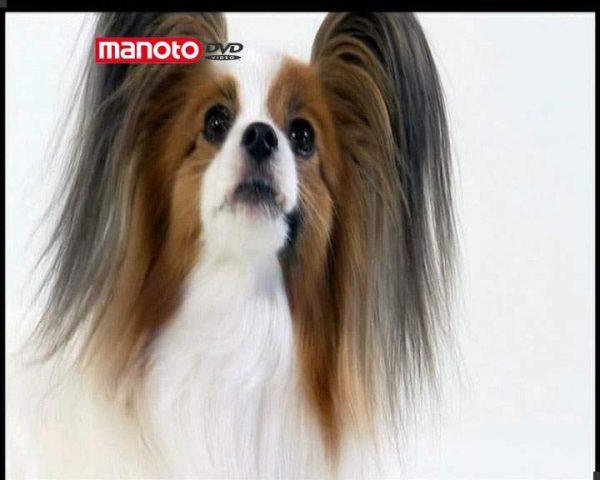 دانلود مستند دنیای سگ ها 3 - 1 از مجموعه دنیای سگ ها