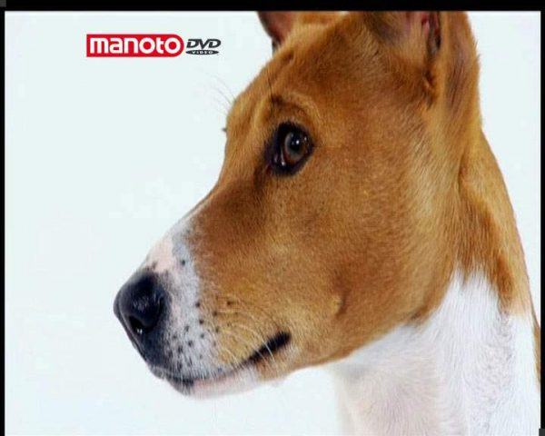 دانلود مستند دنیای سگ ها ۳ – ۲ از مجموعه دنیای سگ ها