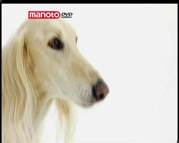 دانلود مستند دنیای سگ ها 3 - 3 از مجموعه دنیای سگ ها