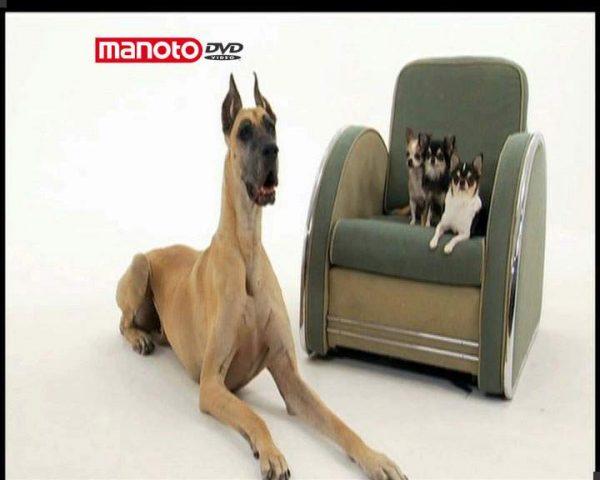 دانلود مستند دنیای سگ ها 3 - 5 از مجموعه دنیای سگ ها
