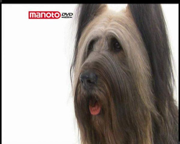 دانلود مستند دنیای سگ ها 4 - 1 از مجموعه دنیای سگ ها