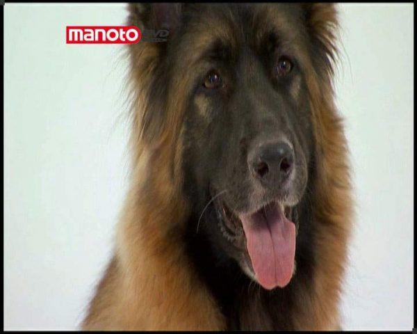 دانلود مستند دنیای سگ ها 1 - 3 از مجموعه دنیای سگ ها