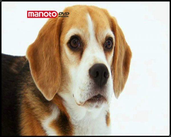 دانلود مستند دنیای سگ ها 1 - 4 از مجموعه دنیای سگ ها