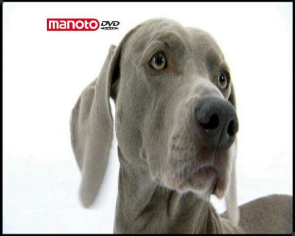 دانلود مستند دنیای سگ ها ۱ – ۶ از مجموعه دنیای سگ ها