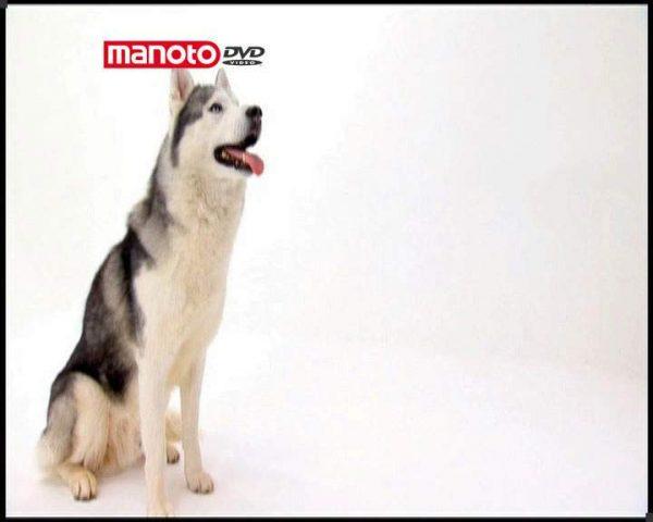دانلود مستند دنیای سگ ها 1 - 7 از مجموعه دنیای سگ ها