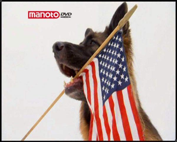 دانلود مستند دنیای سگ ها 1 - 8 از مجموعه دنیای سگ ها