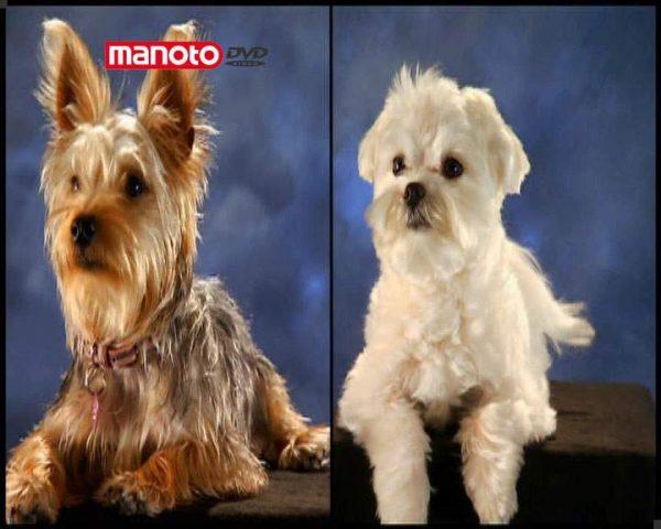 دانلود مستند سگ های مد روز از مجموعه دنیای سگ ها