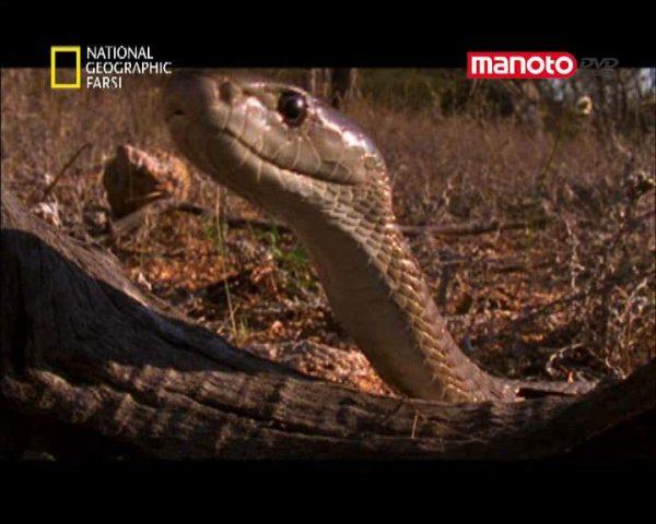 دانلود مستند افریقا از مجموعه کشنده ترین حیوانات جهان