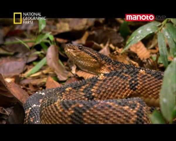 دانلود مستند آمازون از مجموعه کشنده ترین حیوانات جهان