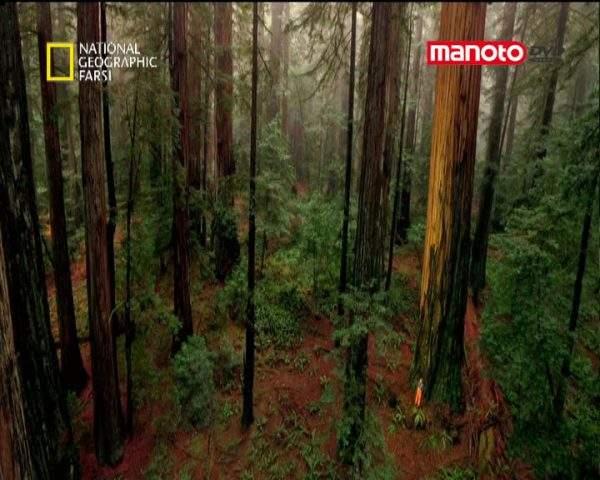 دانلود مستند سرخ چوب از مجموعه شگفت انگیزترین عکس ها