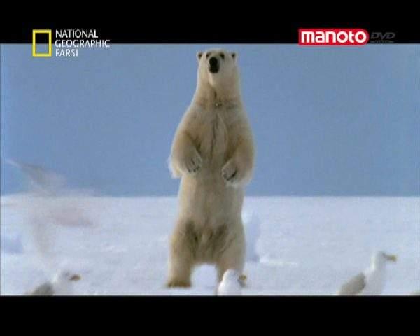 دانلود مستند خرس قطبی از مجموعه شکارچیان