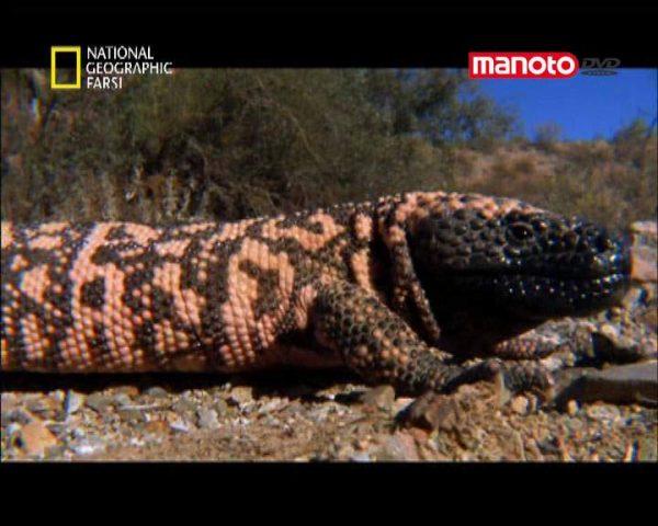 دانلود مستند آمریکای شمالی از مجموعه کشنده ترین حیوانات جهان