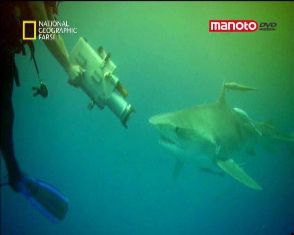 دانلود مستند ازدحام کوسه ماهی از مجموعه تصویرگران جسور
