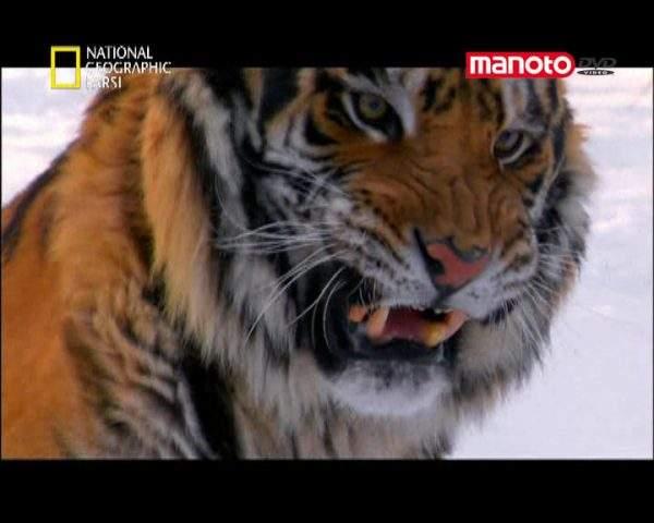 دانلود مستند آسیا سرزمینی پهناور از مجموعه کشنده ترین حیوانات جهان