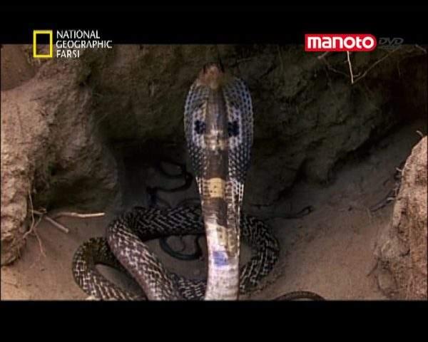 دانلود مستند هند از مجموعه کشنده ترین حیوانات جهان