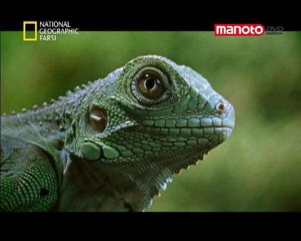 دانلود مستند جنگل از مجموعه کشنده ترین حیوانات جهان