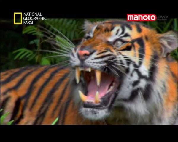 دانلود مستند کرانه های آسیایی اقیانوس آرام از مجموعه کشنده ترین حیوانات جهان