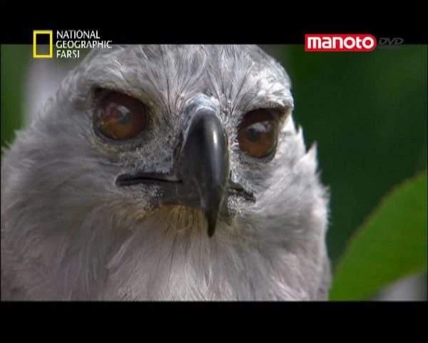 دانلود مستند کاستا ریکا از مجموعه کشنده ترین حیوانات جهان