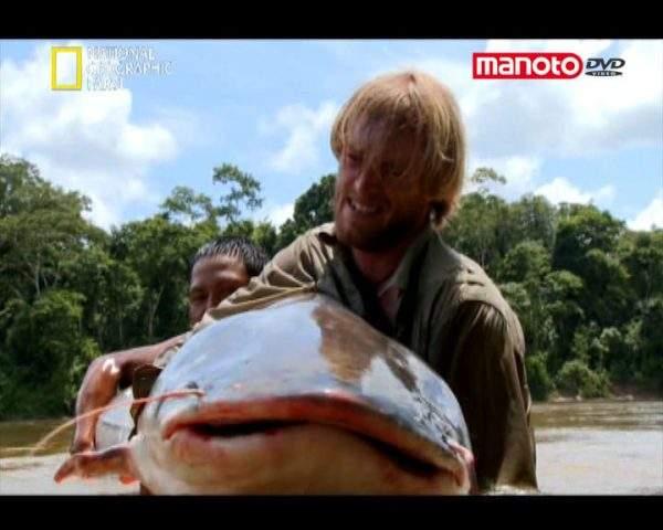 دانلود مستند گربه ماهی غول آسا از مجموعه ماهی مبارز