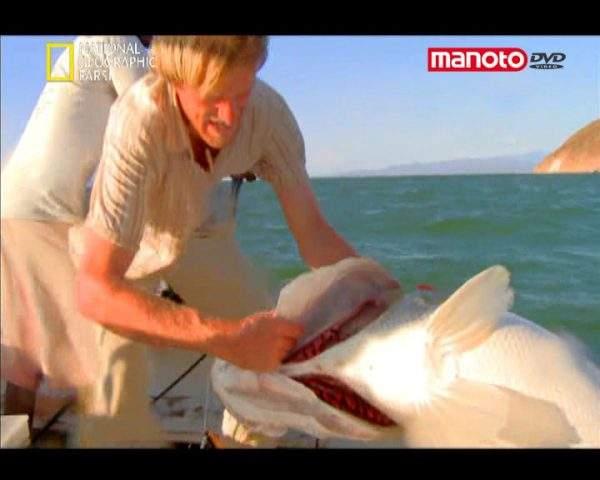 دانلود مستند ماموت نیل از مجموعه ماهی مبارز