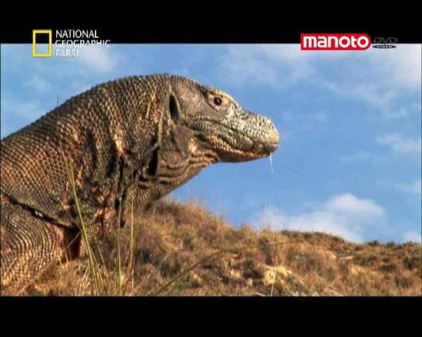 دانلود مستند شکار اژدها از مجموعه ماموریت های خطرناک