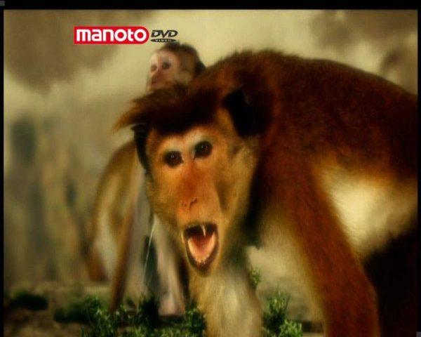 دانلود مستند امپراطوری میمون ها - 14 از مجموعه امپراطوری میمون ها