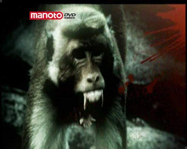 دانلود مستند امپراطوری میمون ها - 3 از مجموعه امپراطوری میمون ها