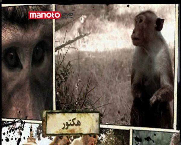 دانلود مستند امپراطوری میمون ها - 5 از مجموعه امپراطوری میمون ها
