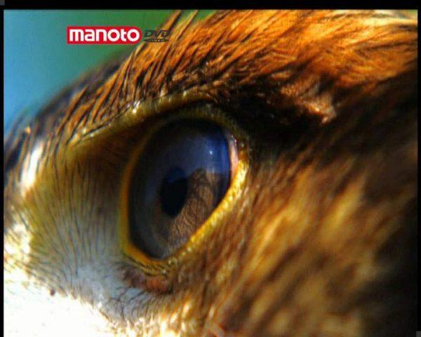 دانلود مستند قسمت اول از مجموعه شکار و بقا
