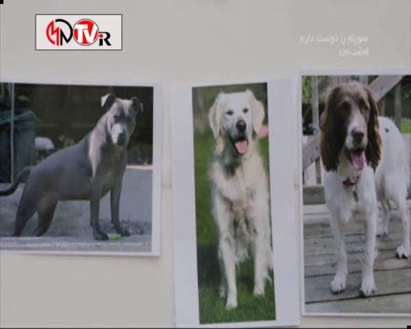 دانلود مستند خلوت سگها - 3 از مجموعه خلوت سگها