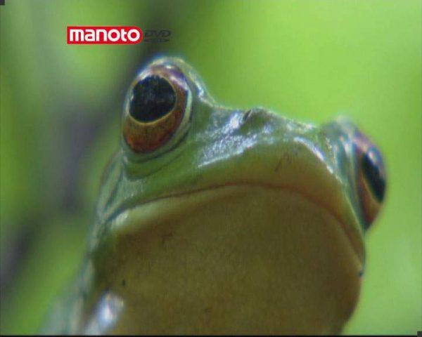 دانلود مستند ژاپن از مجموعه در توان طبیعت