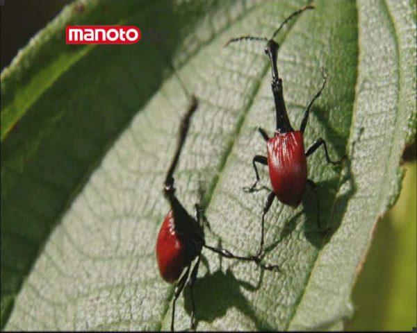 دانلود مستند ماداگاسکار از مجموعه در توان طبیعت