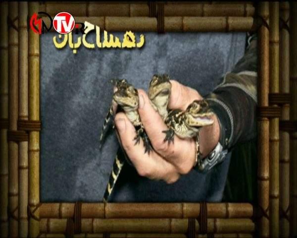 دانلود مستند تمساح بان - 8 از مجموعه تمساح بان