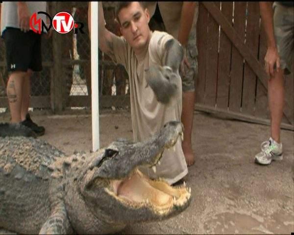 دانلود مستند تمساح بان - 9 از مجموعه تمساح بان