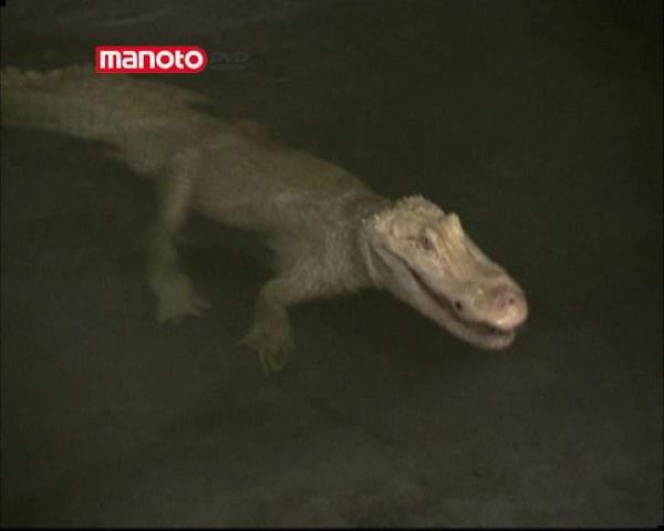 دانلود مستند تمساح در لوله فاضلاب از مجموعه جستجوی هیولا