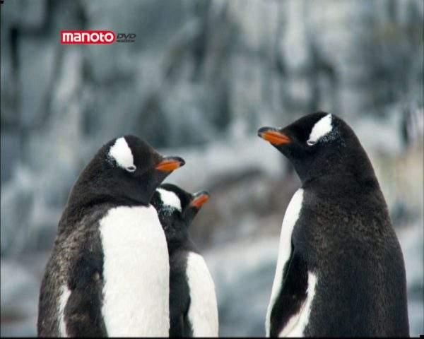 دانلود مستند جنوبگان از مجموعه آبی بیکران