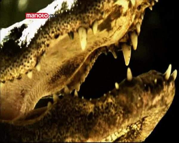 دانلود مستند توفان قرنطینهی تمساحها از مجموعه کشیک باتلاق