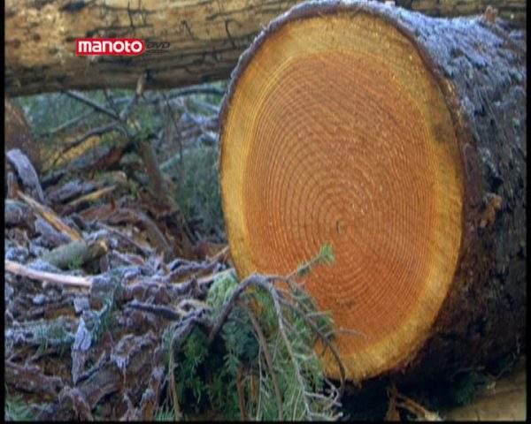 دانلود مستند چوب از مجموعه بیشتر بشناسیم