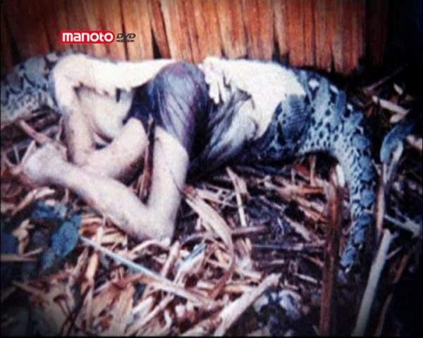 دانلود مستند مارهای قاتل از مجموعه جستجوی هیولا