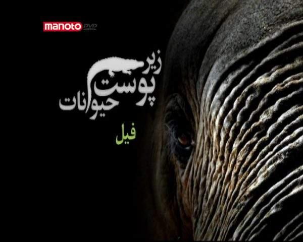 دانلود مستند فیل از مجموعه زیر پوست حیوانات