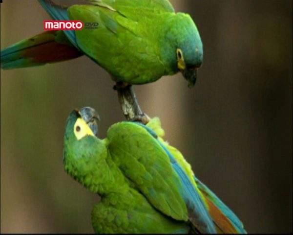 دانلود مستند پانتانال از مجموعه نادیدههای طبیعت آمریکای جنوبی